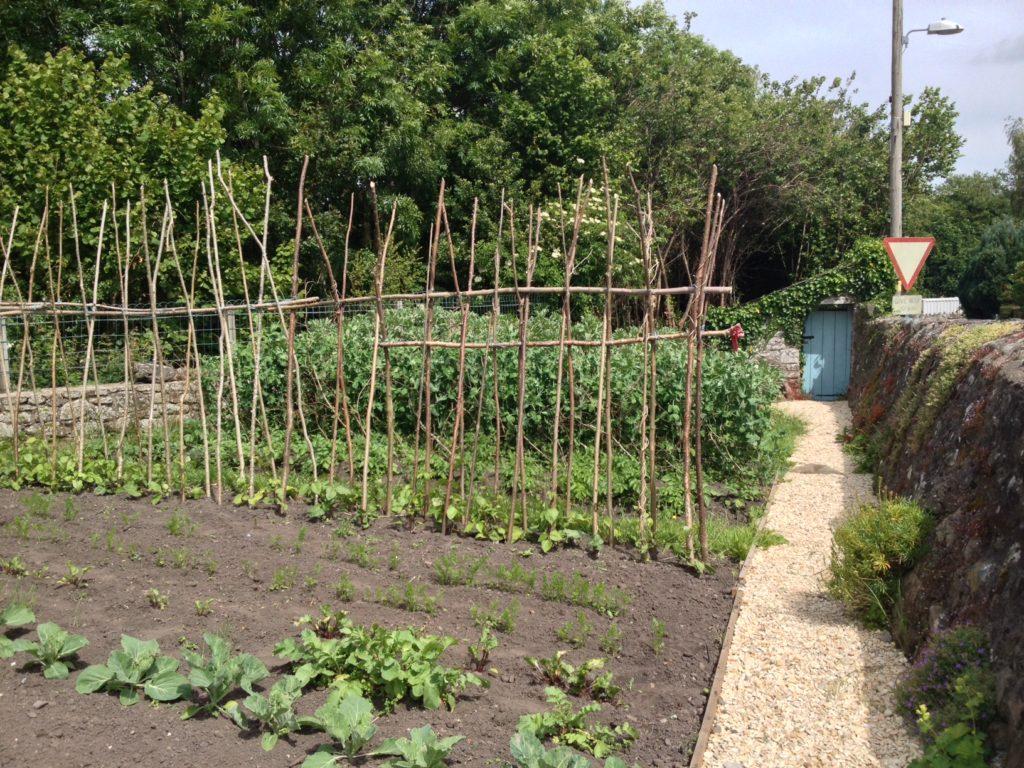 The cottage veggie garden