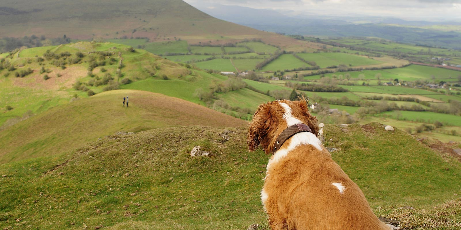 Watching over the Beacons landscape